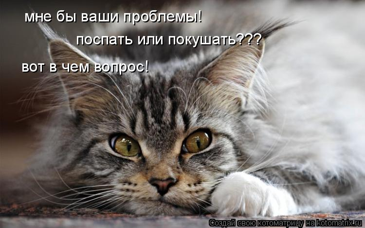 Котоматрица: мне бы ваши проблемы! поспать или покушать??? вот в чем вопрос!