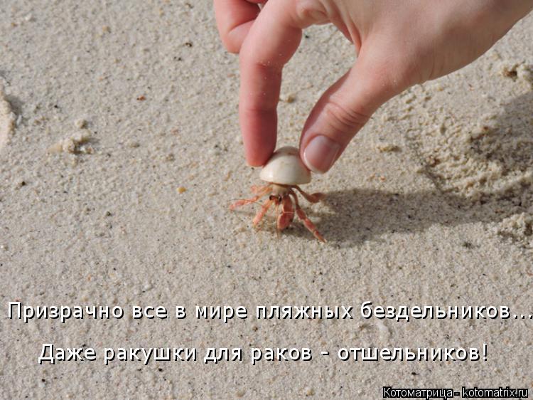 Котоматрица: Даже ракушки для раков - отшельников! Призрачно все в мире пляжных бездельников...