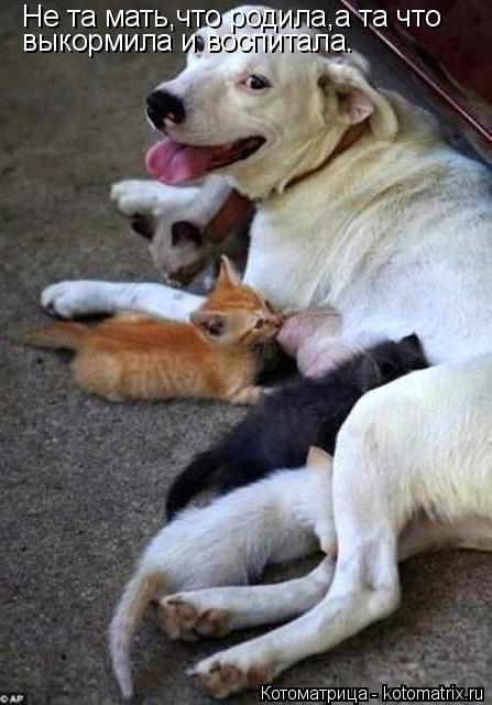 Котоматрица: Не та мать,что родила,а та что выкормила и воспитала.