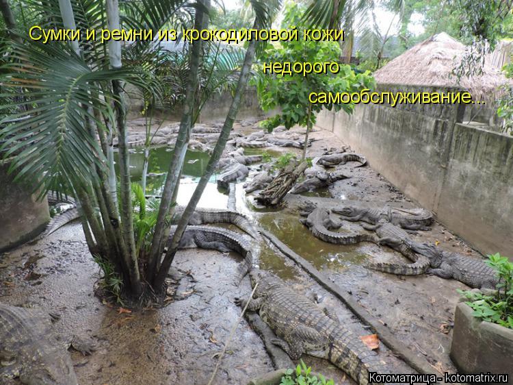 Котоматрица: Сумки и ремни из крокодиловой кожи недорого самообслуживание...