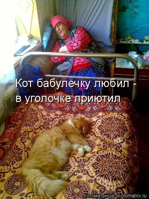 Котоматрица: Кот бабулечку любил -  в уголочке приютил