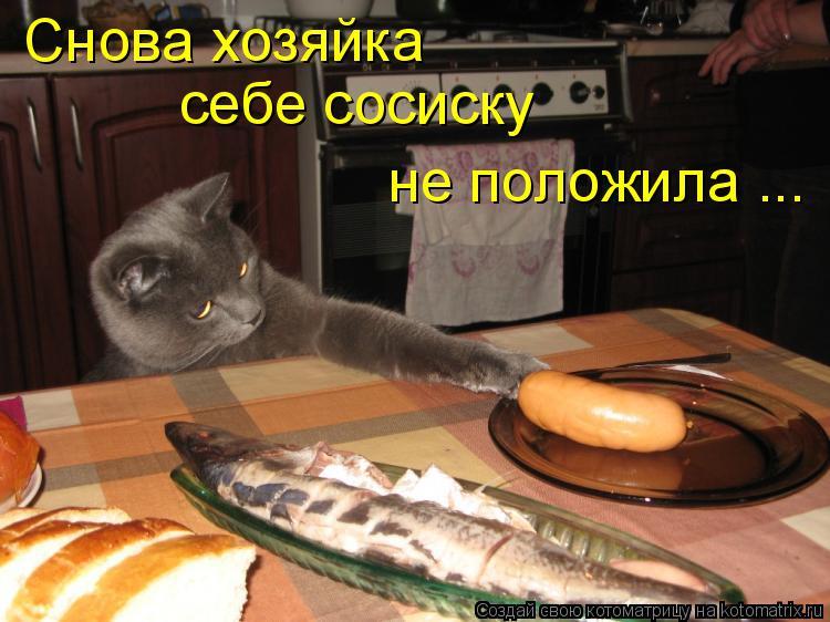 Котоматрица: Снова хозяйка  себе сосиску  не положила ...