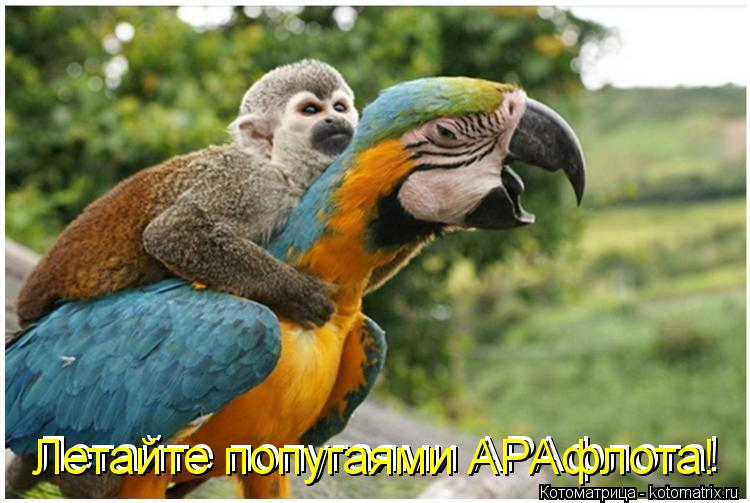 Котоматрица: Летайте попугаями АРАфлота! Летайте попугаями АРАфлота!