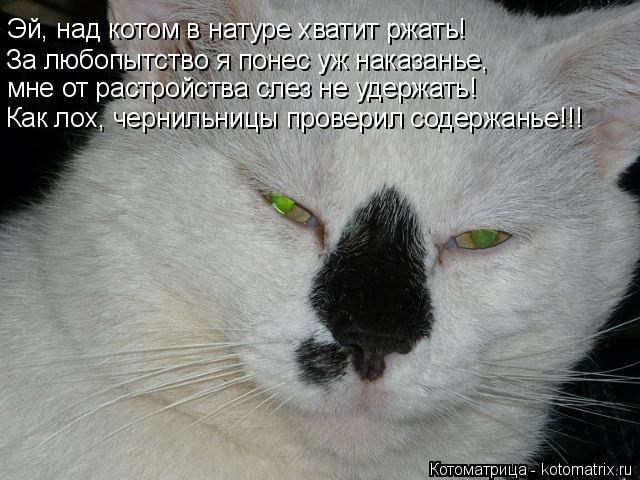 Котоматрица: Эй, над котом в натуре хватит ржать!  За любопытство я понес уж наказанье, мне от растройства слез не удержать! Как лох, чернильницы проверил