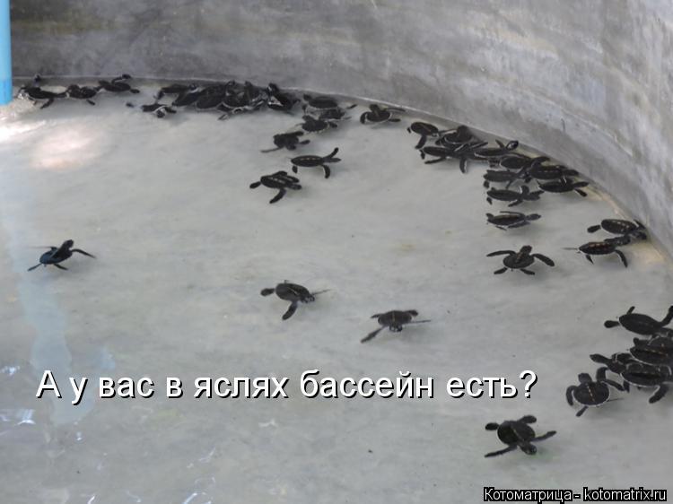 Котоматрица: А у вас в яслях бассейн есть?