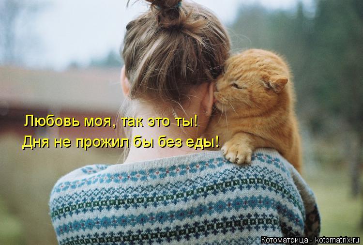 Котоматрица: Любовь моя, так это ты!  Дня не прожил бы без еды!