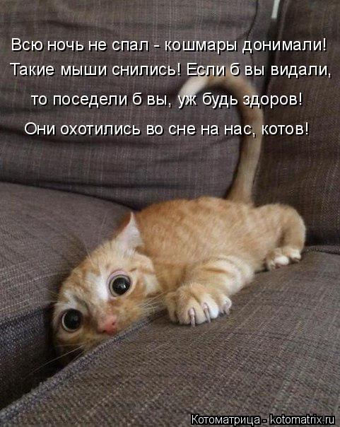 Котоматрица: Всю ночь не спал - кошмары донимали! Такие мыши снились! Если б вы видали, то поседели б вы, уж будь здоров! Они охотились во сне на нас, котов!