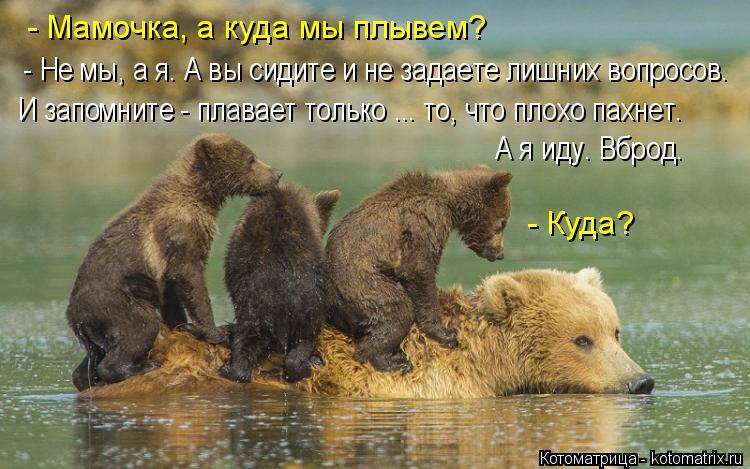 Котоматрица: - Мамочка, а куда мы плывем? - Не мы, а я. А вы сидите и не задаете лишних вопросов. И запомните - плавает только ... то, что плохо пахнет. А я иду. В