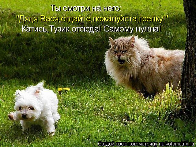"""Котоматрица: Ты смотри на него: """"Дядя Вася,отдайте,пожалуйста,грелку!"""" Катись,Тузик,отсюда! Самому нужна!"""
