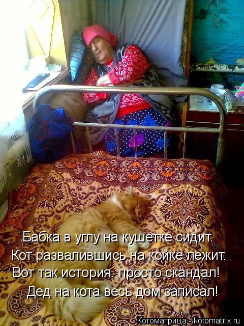 Котоматрица: Дед на кота весь дом записал! Бабка в углу на кушетке сидит. Кот развалившись на койке лежит. Вот так история, просто скандал!
