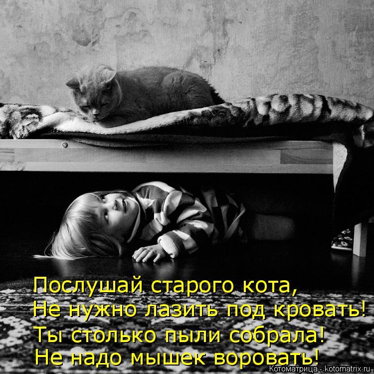 Котоматрица: Послушай старого кота, Не нужно лазить под кровать! Ты столько пыли собрала! Не надо мышек воровать!