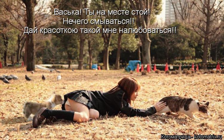 Котоматрица: Васька! Ты на месте стой! Нечего смываться!! Дай красоткою такой мне налюбоваться!!