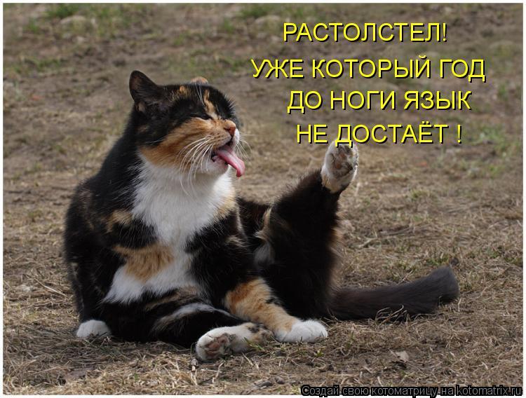 Котоматрица: РАСТОЛСТЕЛ!  УЖЕ КОТОРЫЙ ГОД ДО НОГИ ЯЗЫК НЕ ДОСТАЁТ !