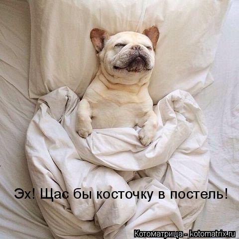 Котоматрица: Эх! Щас бы косточку в постель!
