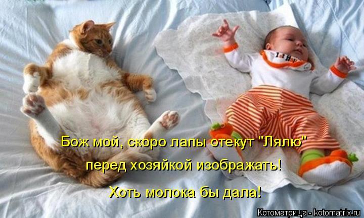 "Котоматрица: Бож мой, скоро лапы отекут ""Лялю""  перед хозяйкой изображать! Хоть молока бы дала!"