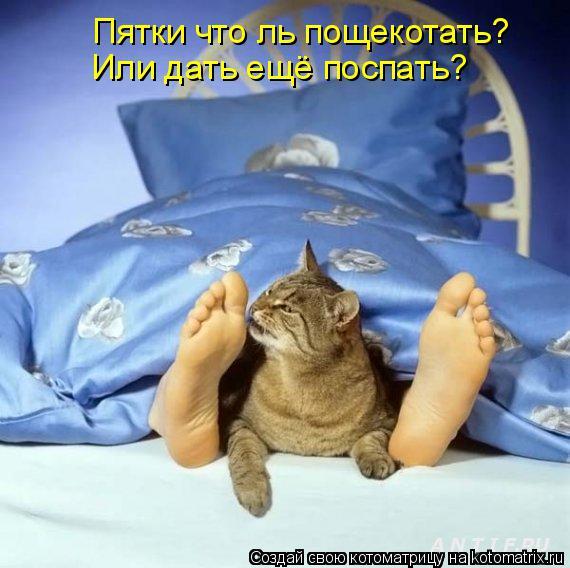 Котоматрица: Или дать ещё поспать? Пятки что ль пощекотать?