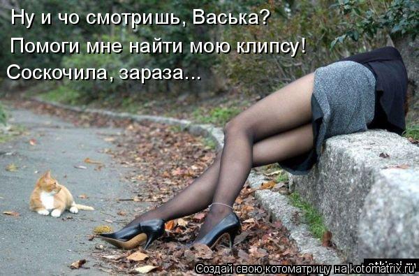 Котоматрица: Ну и чо смотришь, Васька? Помоги мне найти мою клипсу! Соскочила, зараза...
