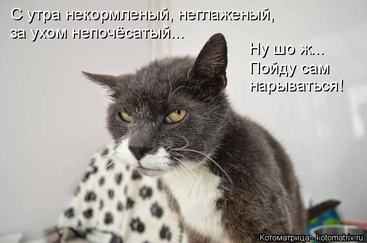 Котоматрица: С утра некормленый, неглаженый,  за ухом непочёсатый... Ну шо ж... Пойду сам нарываться!