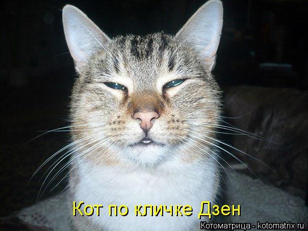 Котоматрица: Кот по кличке Дзен