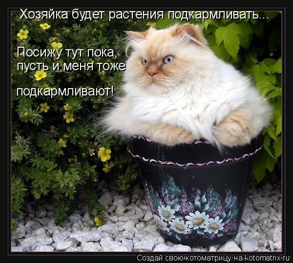 Котоматрица: Хозяйка будет растения подкармливать... Посижу тут пока,  пусть и меня тоже подкармливают!