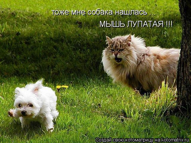 Котоматрица: тоже мне собака нашлась ... МЫШЬ ЛУПАТАЯ !!!