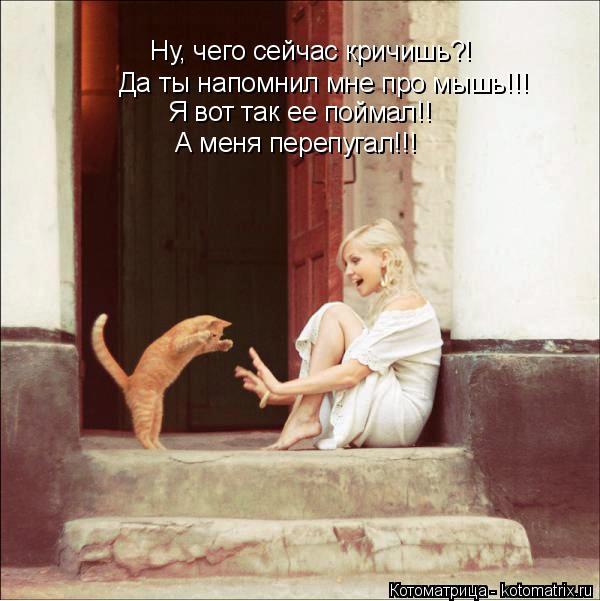 Котоматрица: Да ты напомнил мне про мышь!!! Я вот так ее поймал!! Ну, чего сейчас кричишь?! А меня перепугал!!!