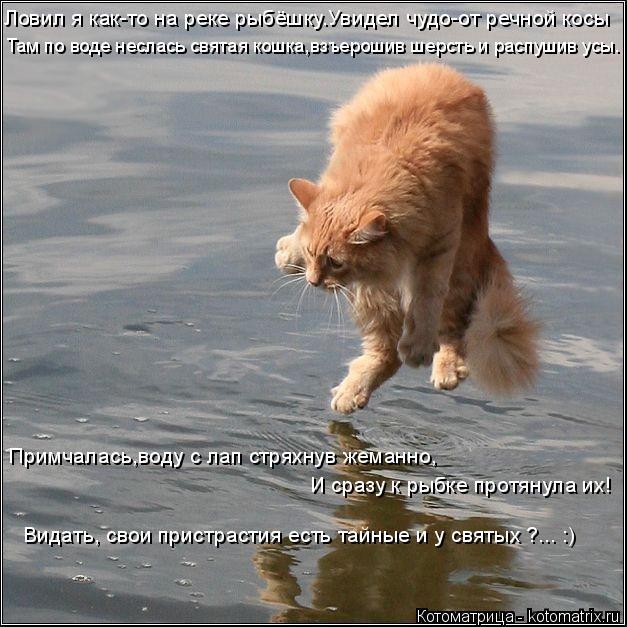 Котоматрица: Ловил я как-то на реке рыбёшку.Увидел чудо-от речной косы Там по воде неслась святая кошка,взъерошив шерсть и распушив усы. Примчалась,воду