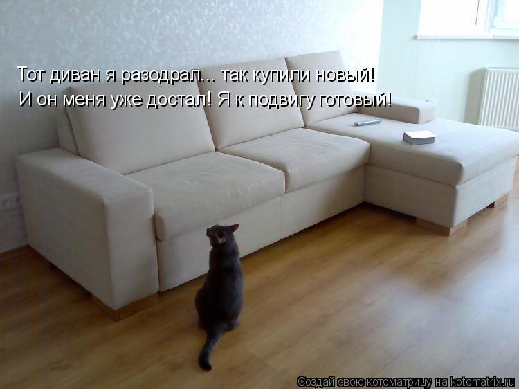Котоматрица: Тот диван я разодрал... так купили новый! И он меня уже достал! Я к подвигу готовый!