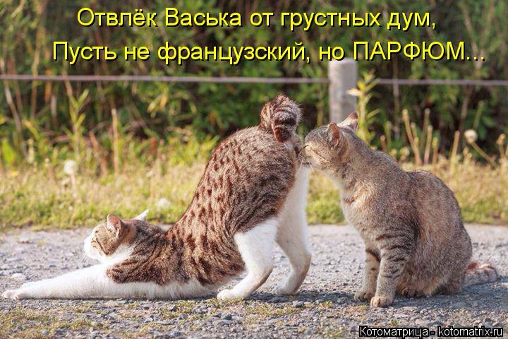 Котоматрица: Отвлёк Васька от грустных дум, Пусть не французский, но ПАРФЮМ...