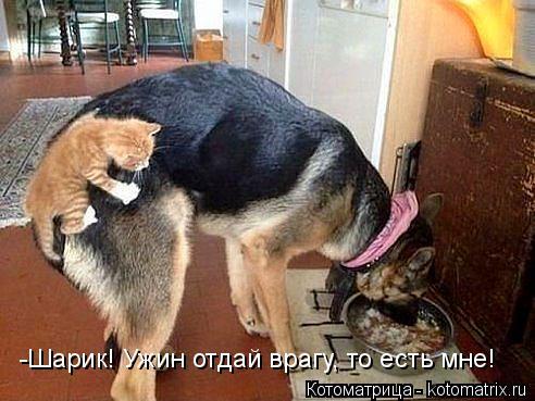 Котоматрица: -Шарик! Ужин отдай врагу, то есть мне!