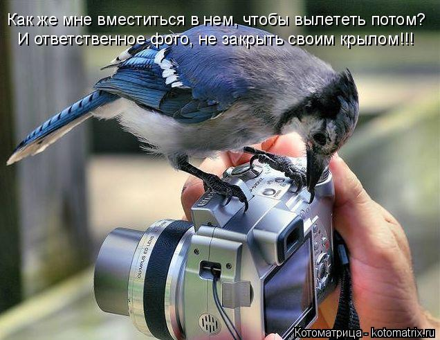 Котоматрица: И ответственное фото, не закрыть своим крылом!!! Как же мне вместиться в нем, чтобы вылететь потом?