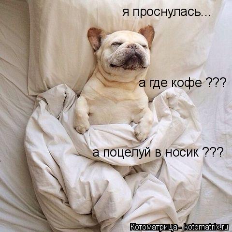 Котоматрица: я проснулась... а где кофе ??? а поцелуй в носик ???
