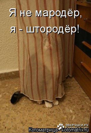 Котоматрица: Я не мародёр, я - штородёр!