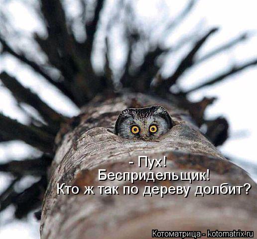 Котоматрица: - Пух!  Беспридельщик!  Кто ж так по дереву долбит?