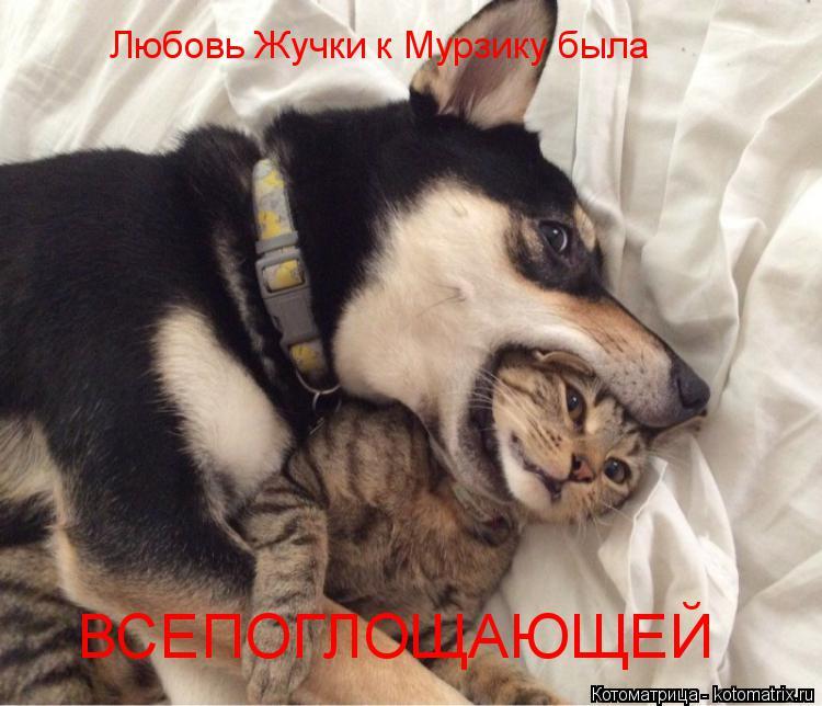 Котоматрица: Любовь Жучки к Мурзику была ВСЕПОГЛОЩАЮЩЕЙ