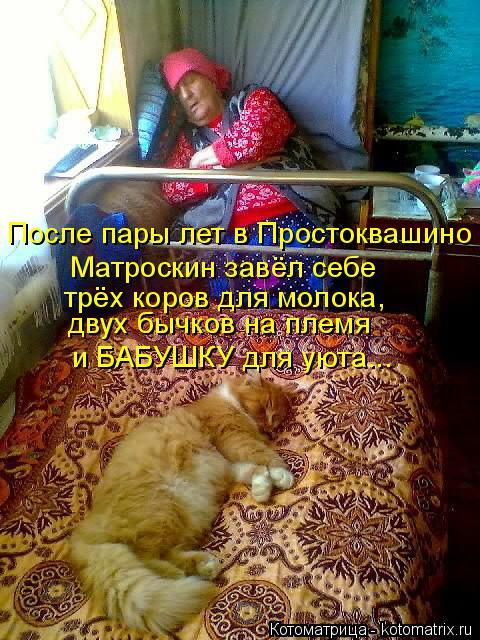 Котоматрица: После пары лет в Простоквашино  трёх коров для молока,  Матроскин завёл себе  двух бычков на племя и БАБУШКУ для уюта...