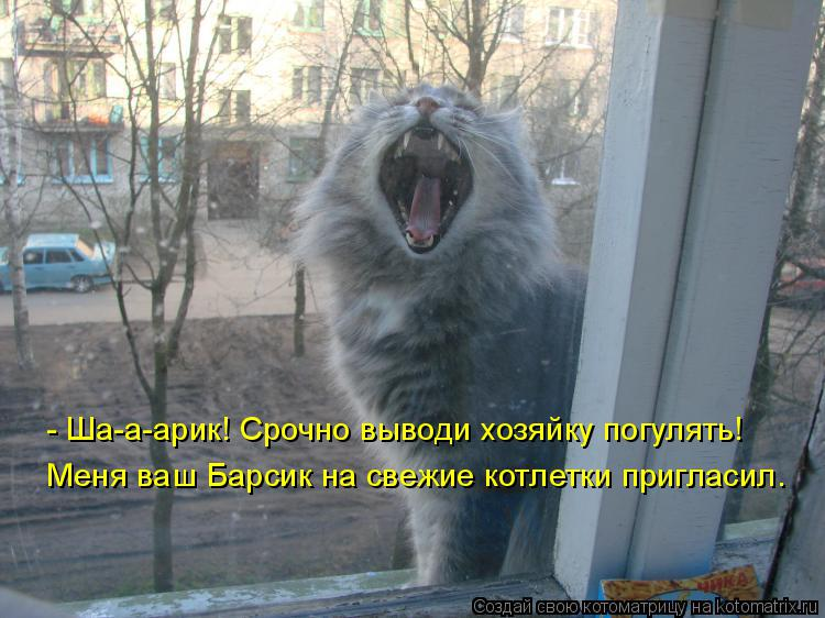 Котоматрица: - Ша-а-арик! Срочно выводи хозяйку погулять!  Меня ваш Барсик на свежие котлетки пригласил.