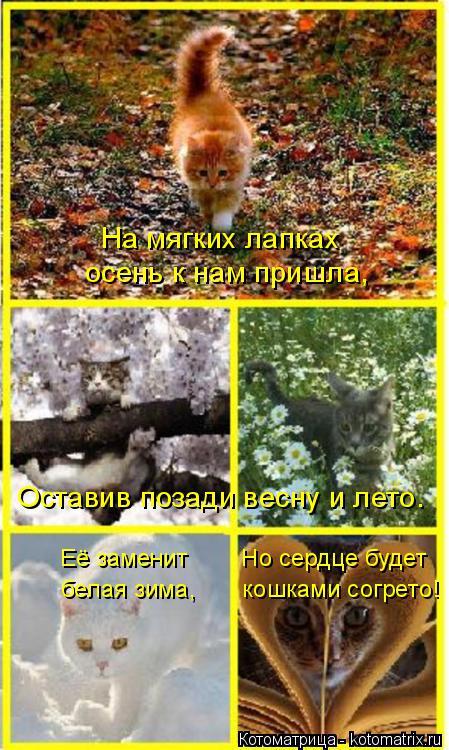 Котоматрица: На мягких лапках  осень к нам пришла, Оставив позади весну и лето. Её заменит        Но сердце будет белая зима,       кошками согрето!