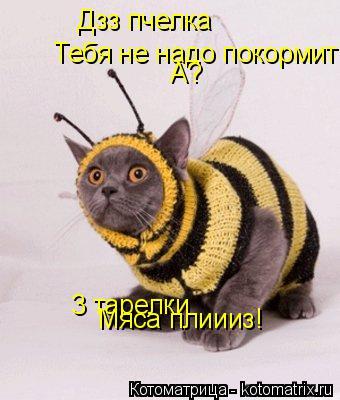 Котоматрица: Дзз пчелка Тебя не надо покормить? А? 3 тарелки Мяса плиииз!