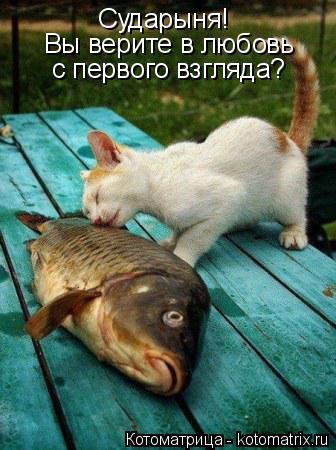 Котоматрица: Сударыня! Вы верите в любовь с первого взгляда?