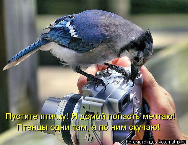 Котоматрица: Пустите птичку! Я домой попасть мечтаю! Птенцы одни там, я по ним скучаю!