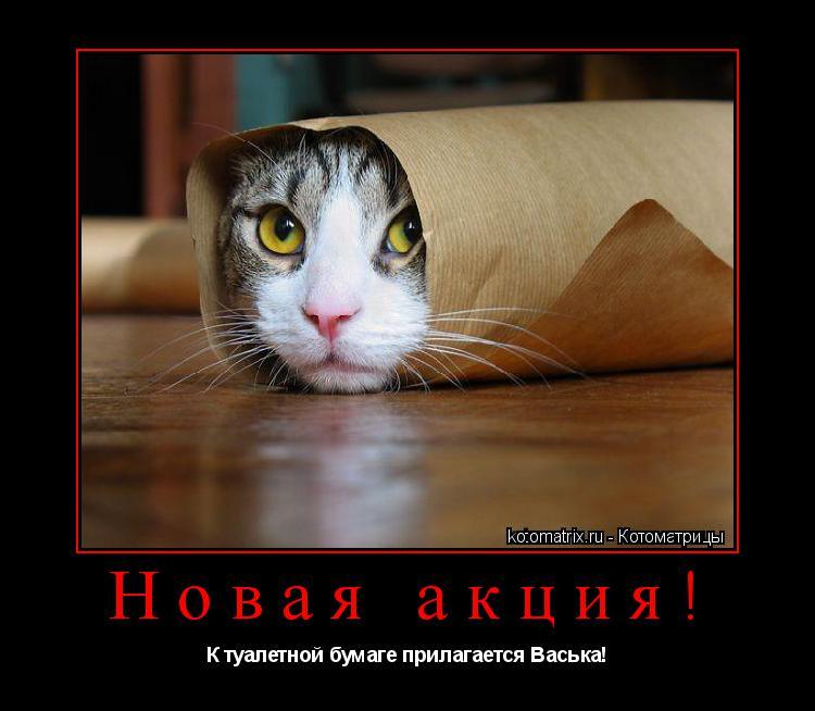 Котоматрица: Новая акция! К туалетной бумаге прилагается Васька!