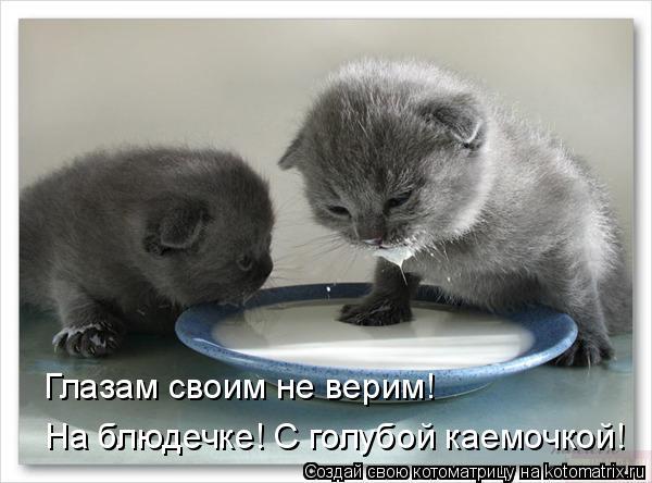 Котоматрица: На блюдечке! С голубой каемочкой! Глазам своим не верим!