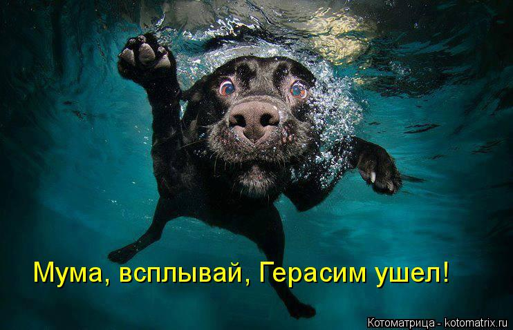 Котоматрица: Мума, всплывай, Герасим ушел!