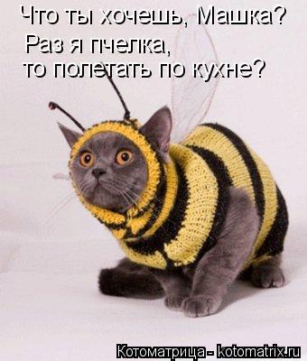 Котоматрица: Что ты хочешь, Машка? Раз я пчелка,  то полетать по кухне?