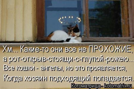 Котоматрица: Хм... Какие-то они все не ПРОХОЖИЕ, а рот-открыв-стоящи-с-глупой-рожею... Все кошки - ангелы, но это проявляется, Когда хозяин подходящий попада