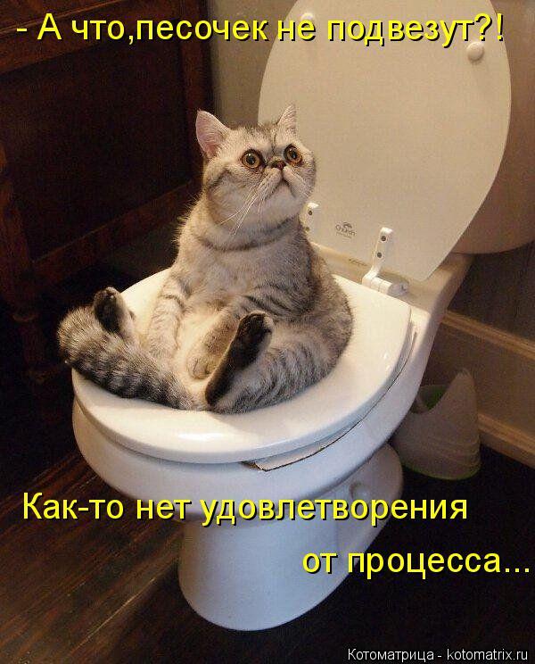 http://kotomatrix.ru/images/lolz/2014/09/19/kotomatritsa_lE.jpg