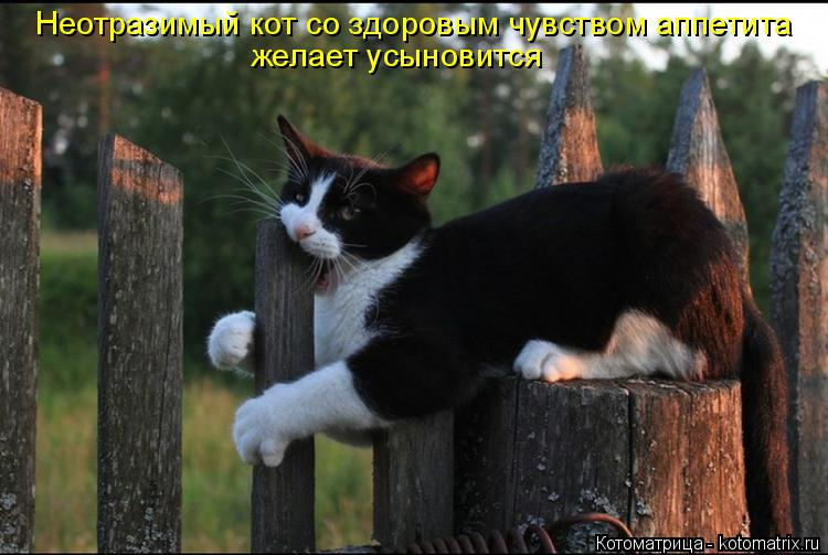 Котоматрица: Неотразимый кот со здоровым чувством аппетита желает усыновится