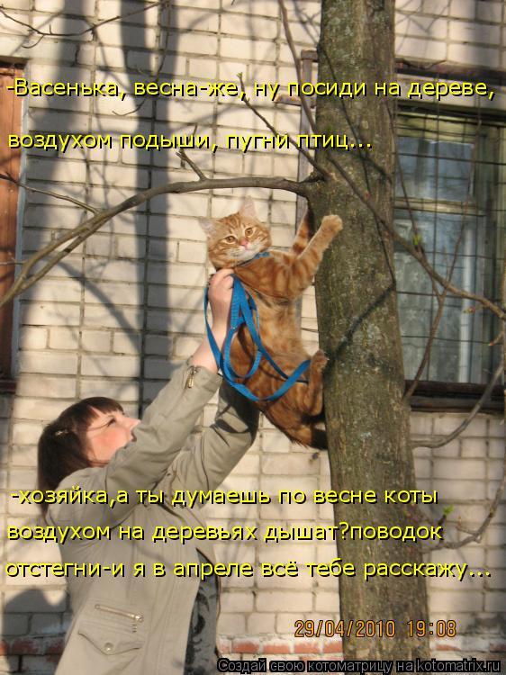 Котоматрица: -хозяйка,а ты думаешь по весне коты -Васенька, весна-же, ну посиди на дереве,  отстегни-и я в апреле всё тебе расскажу... воздухом подыши, пугни