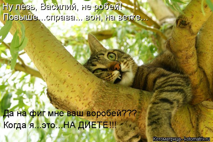 Котоматрица: Ну лезь, Василий, не робей! Повыше...справа... вон, на ветке... Да на фиг мне ваш воробей??? Когда я...это...НА ДИЕТЕ!!!